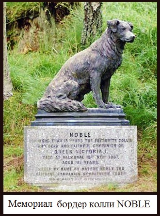 Noble_Queen-Victoria_Border_Collie-statue — копия