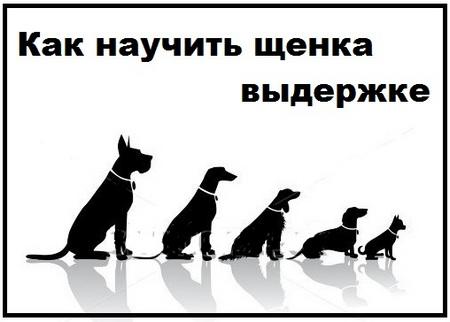 kak-nauchit-shhenka-vyderzhke