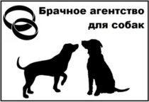 brachnoe-agentstvo-dlya-sobak