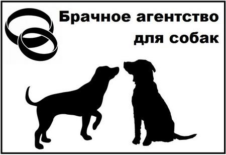 Брачное агенство для собак (Краснодарский край)