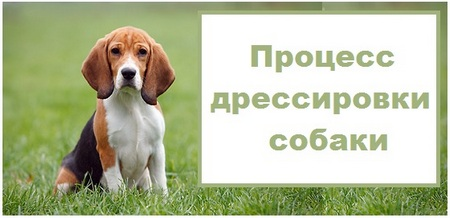 process-dressirovki-sobaki