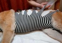 Попона для собаки после операции. Как сделать своими руками